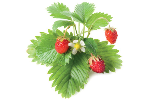 Click And Grow RECHARGE FRAISE