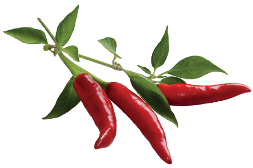 Click And Grow RECHARGE PIMENT